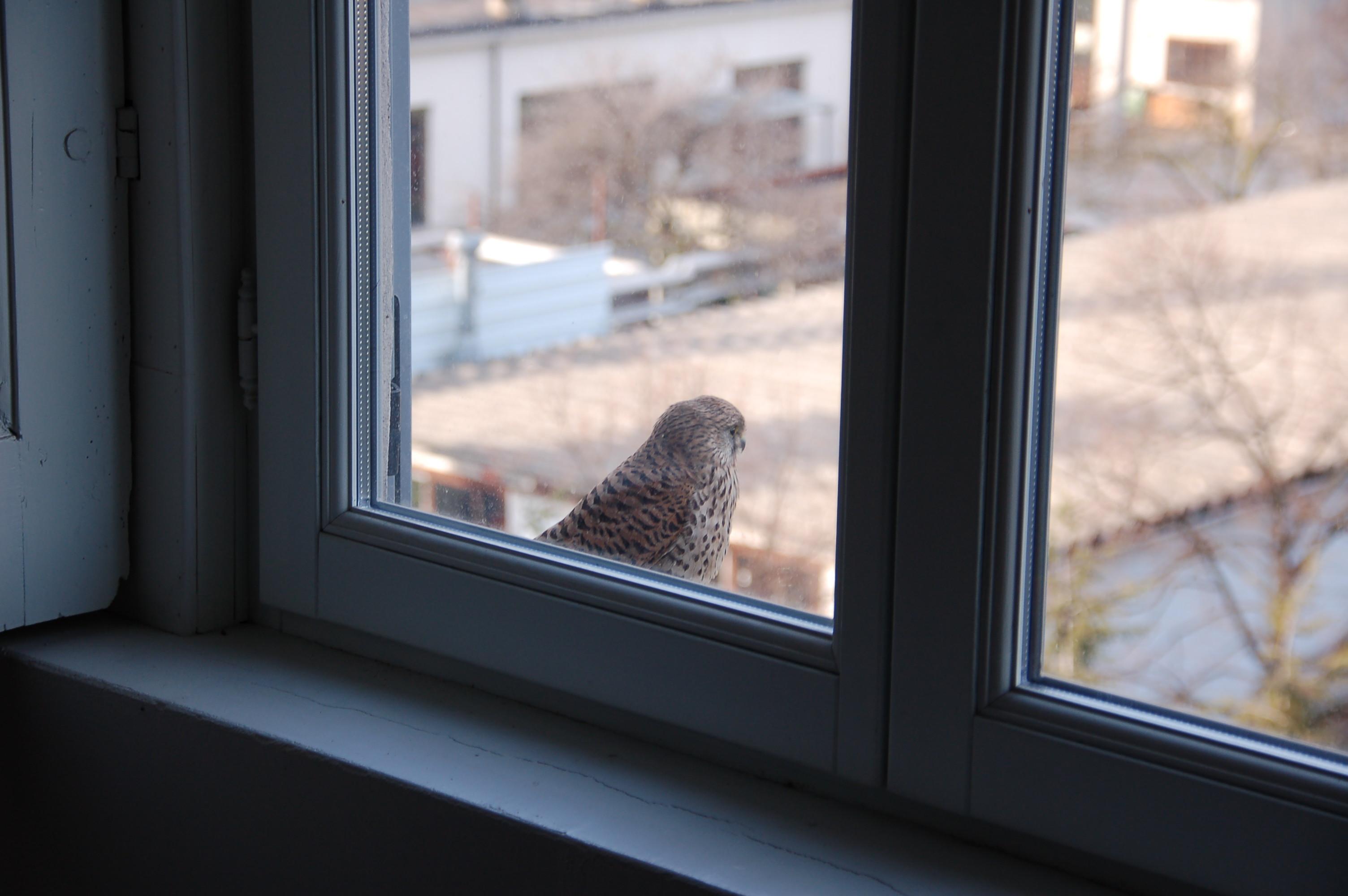 Nero metti un giorno sul davanzale - Davanzale finestra ...